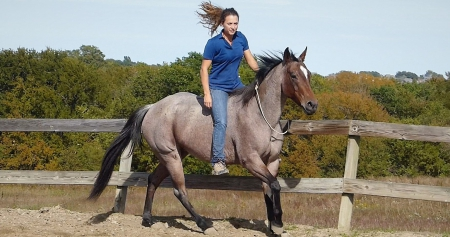 Betsy Spoon, American Quarter Horse Mare for sale in Ohio
